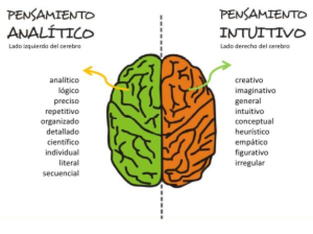 Cerebro - Hemisferios
